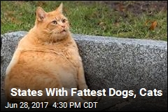 States With Fattest Dogs, Cats