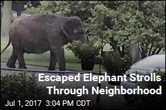 Escaped Elephant Strolls Through Neighborhood