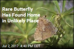 Rare Butterfly Has Found Home in Unlikely Place