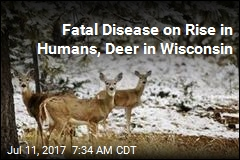 Can Fatal Brain Disease Jump From Deer to Humans?