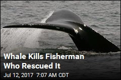 Whale Kills Fisherman Who Rescued It