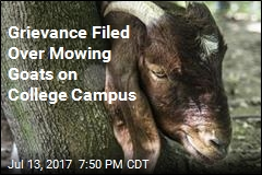 Grievance Filed Over Mowing Goats on College Campus