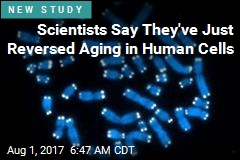 Scientists Reverse Aging— at Least in a Petri Dish