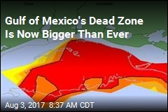 Gulf's of Mexico's Dead Zone Is Now Planet's Biggest