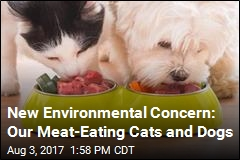 Our Beloved Pets Are Doing Serious Environmental Harm
