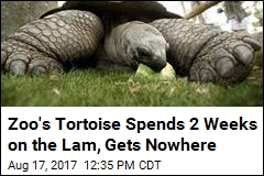 Zoo's Tortoise Spends 2 Weeks on the Lam, Gets Nowhere
