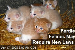Fertile Felines May Require New Laws