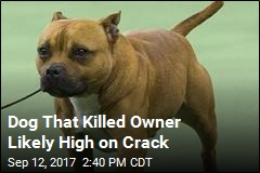 Dog That Killed Owner Likely High on Crack