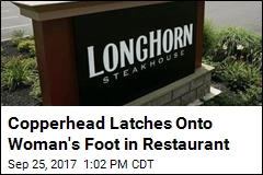 Woman Bitten by Copperhead in Steakhouse Lobby