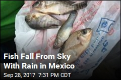 Fish Fall From Sky With Rain in Mexico