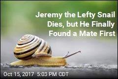 Unlucky-in-Love Jeremy the Snail Dies, but Not Before Finding a Mate