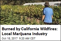 Burned by California Wildfires: Local Marijuana Industry