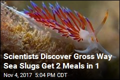 In First, Sea Slugs Wait Until Prey Eats to Get 2 Meals in 1