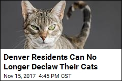You're No Longer Allowed to Declaw Your Cat in Denver