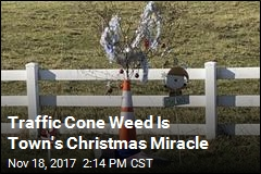 Traffic Cone Weed Is Town's Christmas Miracle