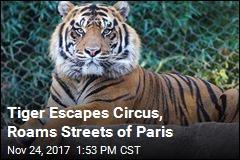 Tiger Escapes Circus, Roams Streets of Paris