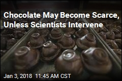Chocolate May Become Scarce, Unless Scientists Intervene
