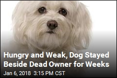 Dog Refused to Leave Its Dead Owner's Side for Weeks