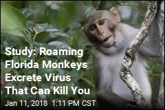 Study Finds Florida Monkeys Excrete Deadly Virus