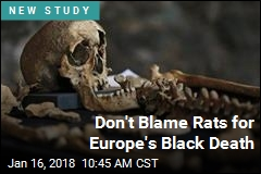 In Case of Black Death, Rats May Be Innocent