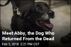 Given up for Dead, Family's Dog Returns After 10 Years