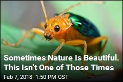 Sometimes Nature Is Beautiful. This Isn't One of Those Times