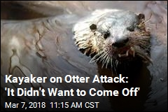 Rowdy Otter Ruins Kayaker's 'Pristine' Morning