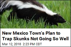 New Mexico Town's Problem: Skunk Carcasses