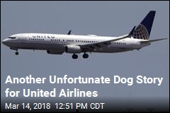 Dog Was Bound for Missouri. United Sent It to Japan