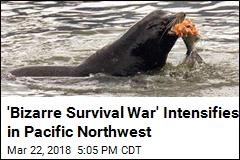 'Bizarre Survival War' Intensifies in Pacific Northwest