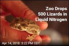 Zoo Drops 500 Lizards in Liquid Nitrogen
