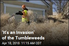 Tumbleweeds Pile Up to Roof of Utah Home