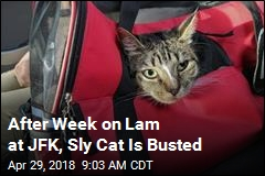 After Week on Lam at JFK, Sly Cat Is Busted