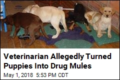 Veterinarian Allegedly Implanted Heroin in Puppies for Drug Ring