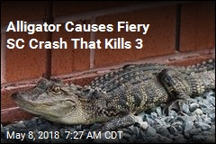 Alligator Causes Fiery SC Crash That Kills 3