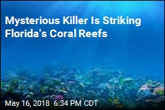 Mysterious Killer Is Striking Florida's Coral Reefs
