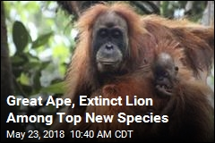 Great Ape, Extinct Lion Among Top New Species