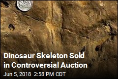 Dinosaur Skeleton Sold in Controversial Auction