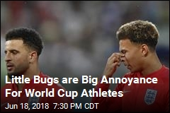 Swarms of Pesky Bugs Irk World Cup Athletes