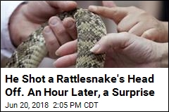 He Shot a Rattlesnake's Head Off. An Hour Later, a Surprise