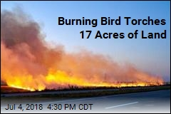 Burning Bird Torches 17 Acres of Land