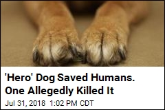 'Hero' Dog Saved Humans. One Allegedly Killed It