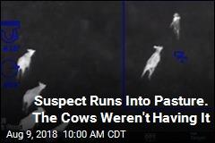 Suspect Runs Into Pasture. The Cows Weren't Having It