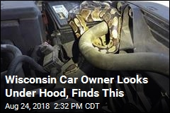 Wisconsin Car Owner Looks Under Hood, Finds This