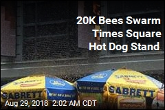 20K Bees Swarm Times Square Hot Dog Stand