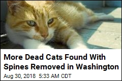 Macabre Killing of Cats in Washington Getting Worse