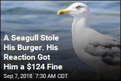 A Seagull Stole His Burger. His Reaction Got Him a $124 Fine
