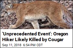 'Unprecedented Event': Oregon Hiker Likely Killed by Cougar