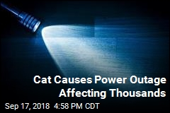 Cat Causes Power Outage Affecting Thousands