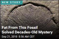 Fat From This Fossil Solved Decades-Old Mystery